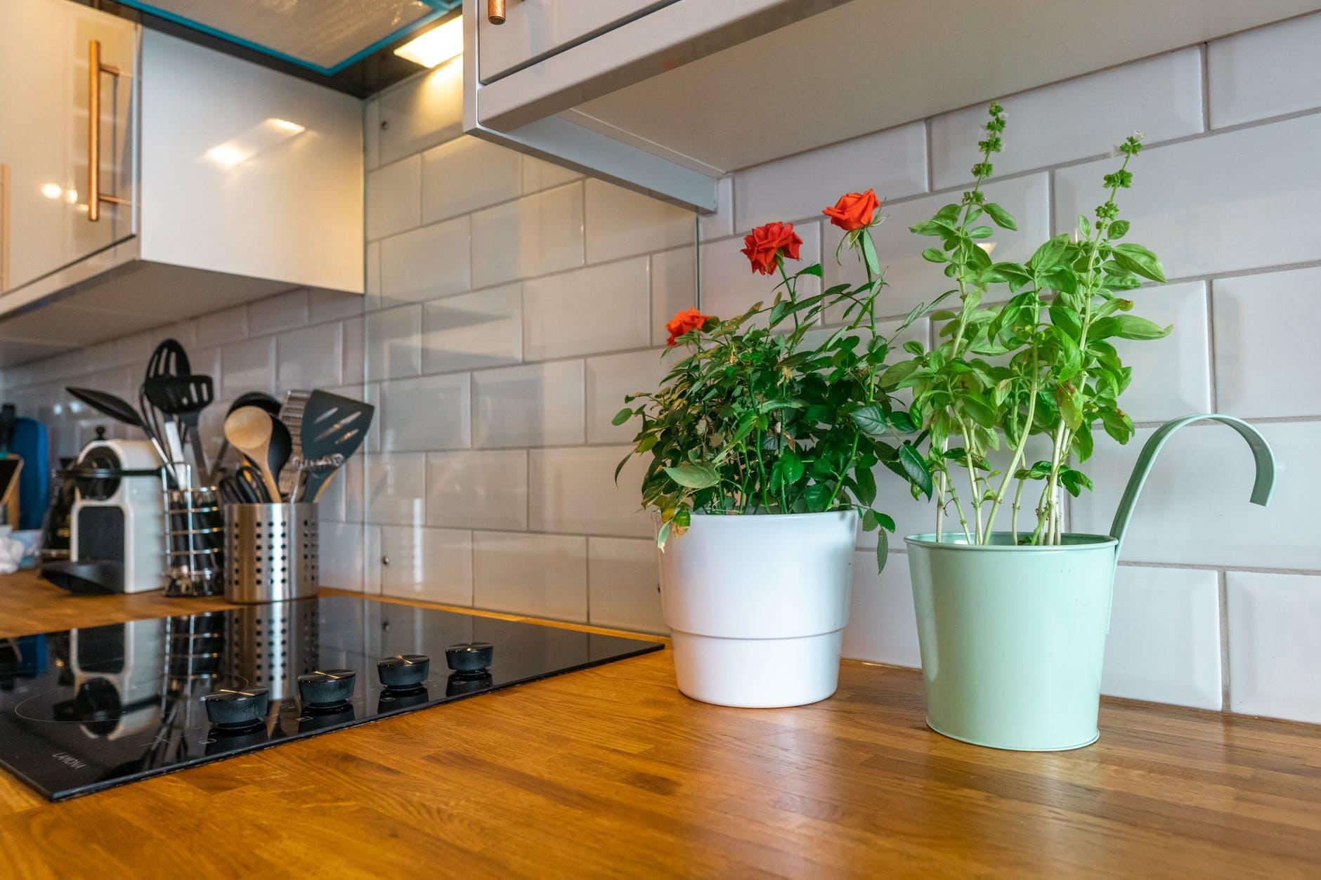 Rośliny doniczkowe a kuchnia, co wybrać i gdzie umieszczać?