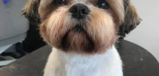 Jak dbać o uszy psa? Nie zaniedbuj swojego pupila!